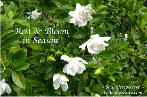 Rest Bloom Gardenia
