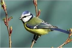 birdintree